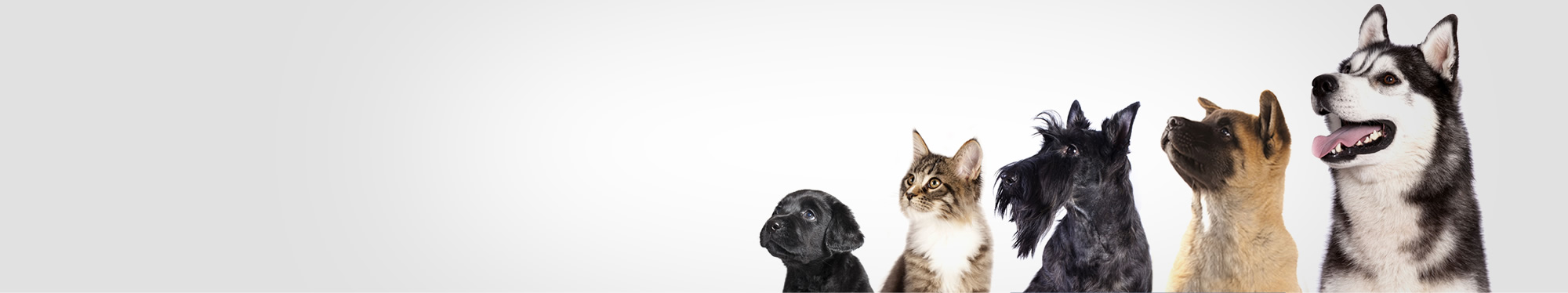 pet animals veterinary services northland
